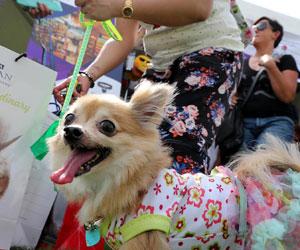 Win a pet goodie hamper worth Dhs500 courtesy Abu Dhabi Pet Festival